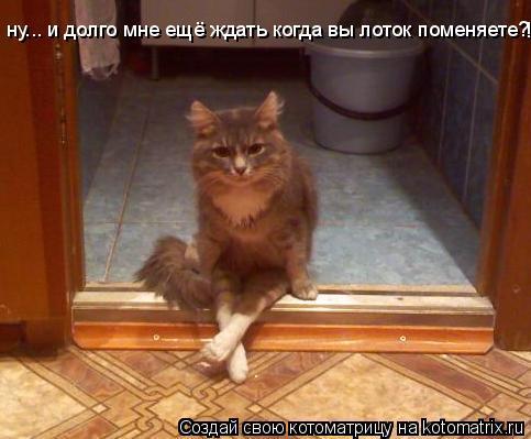Котоматриця!)))) 864709
