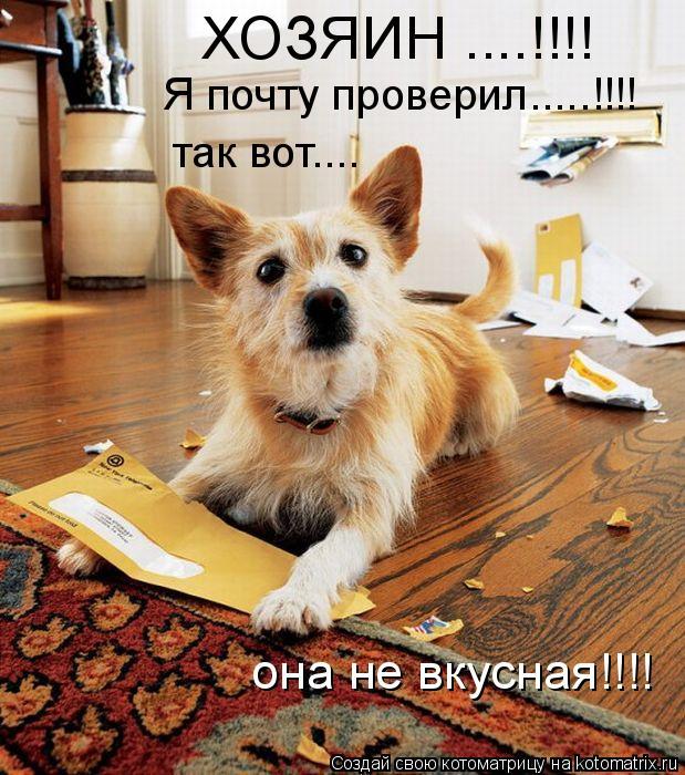 Котоматриця!)))) 867562