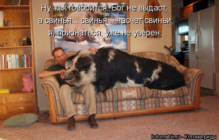 Котоматриця!)))) - Страница 6 906302