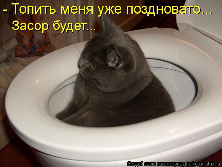 Котоматриця!)))) - Страница 6 919875