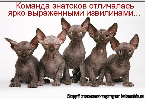 Котоматриця!)))) - Страница 6 922630