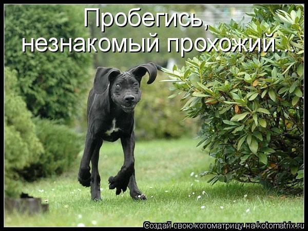 Котоматриця!)))) - Страница 6 923669