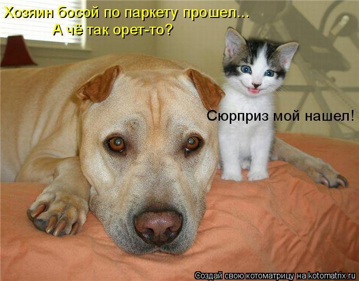 Котоматриця!)))) - Страница 6 930824
