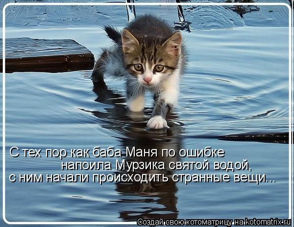 Котоматриця!)))) - Страница 6 930868
