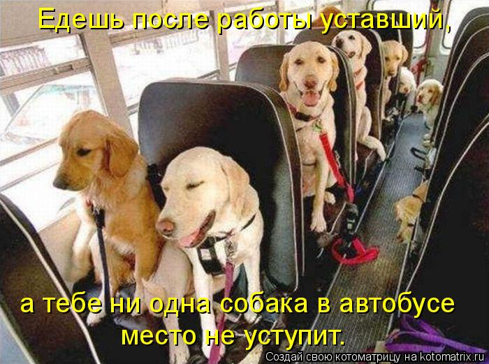 Котоматриця!)))) - Страница 6 933329