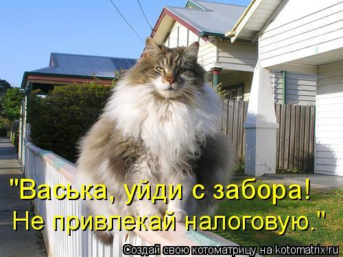 Котоматриця!)))) - Страница 6 934046
