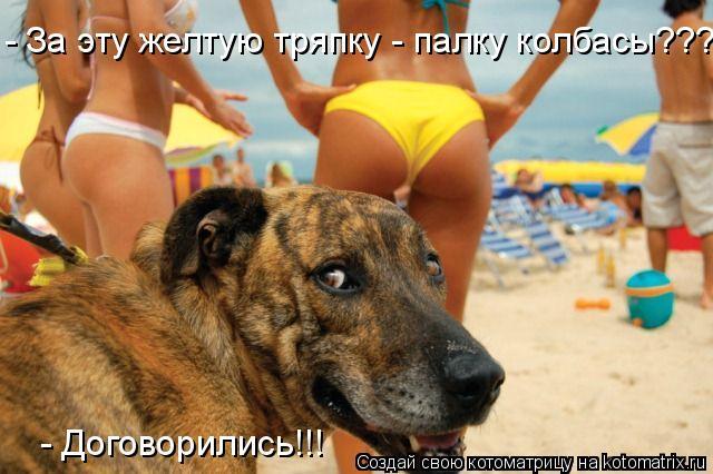 Котоматриця!)))) - Страница 6 934269