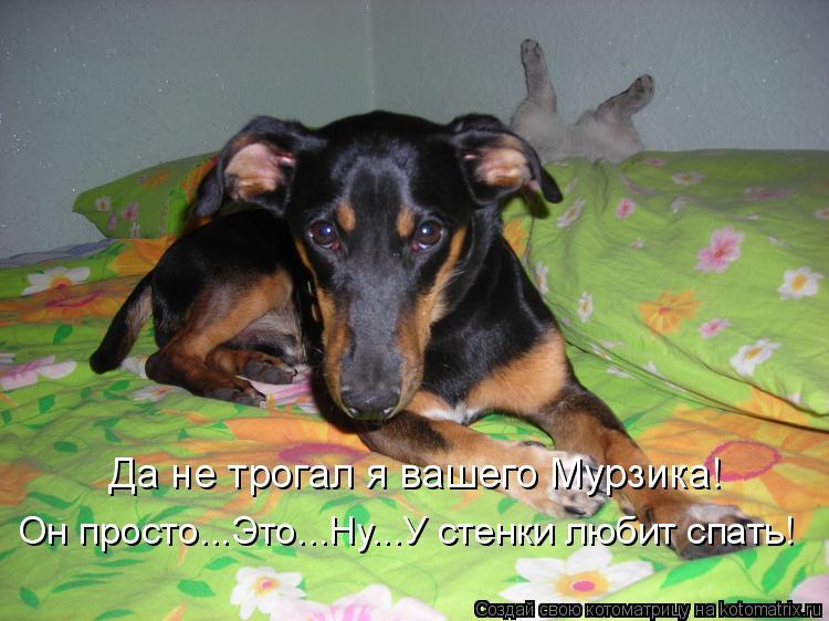 Котоматриця!)))) - Страница 6 936400