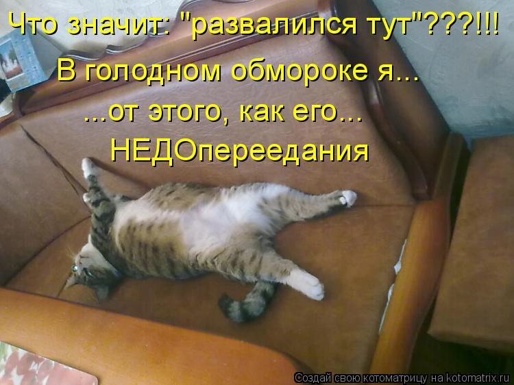 Котоматриця!)))) - Страница 6 936537