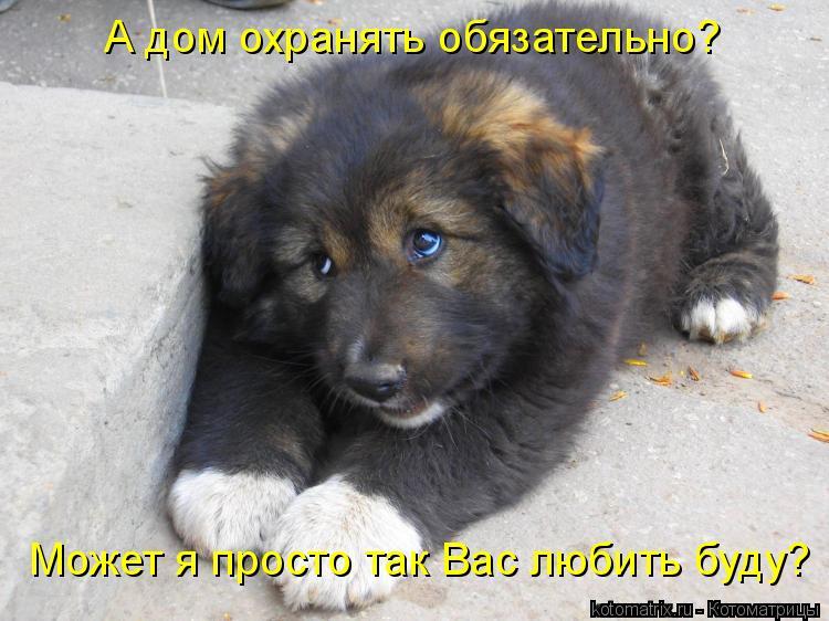 Котоматриця!)))) - Страница 6 936577