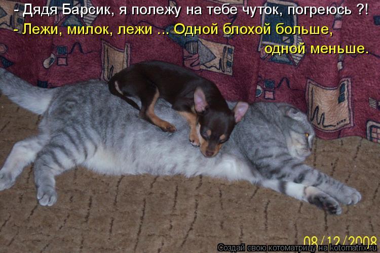 Котоматриця!)))) - Страница 6 938710