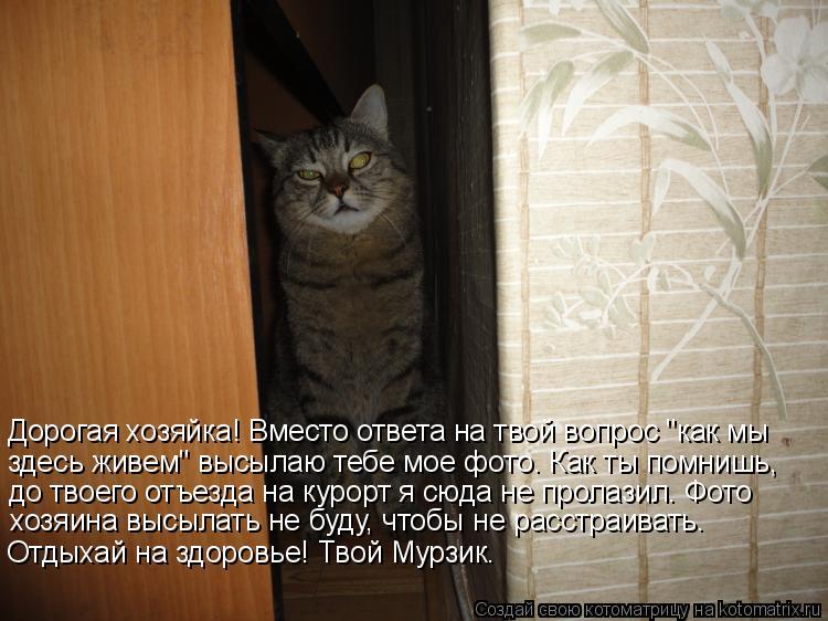 Котоматриця!)))) - Страница 6 942710