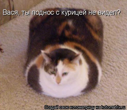 Котоматриця!)))) - Страница 6 943267