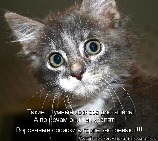 Котоматриця!)))) - Страница 6 943418