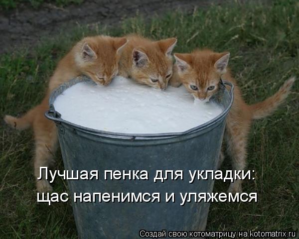 Котоматриця!)))) - Страница 6 943893