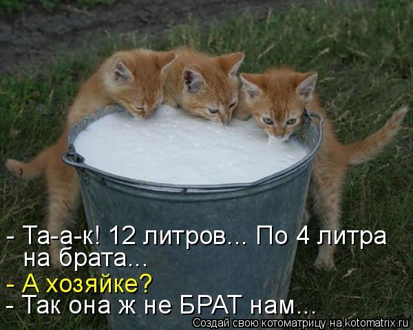 Котоматриця!)))) - Страница 6 943917