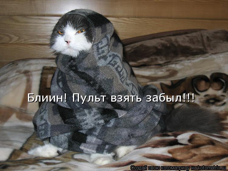 Котоматриця!)))) - Страница 9 948184