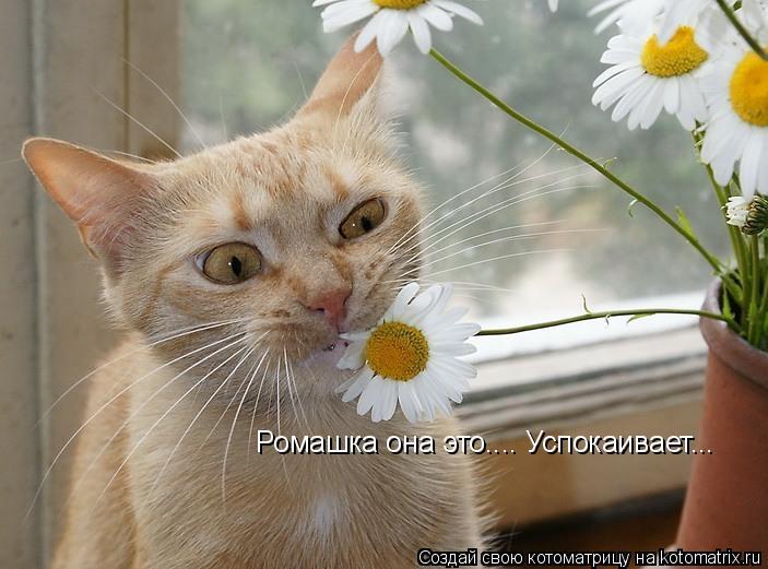 Котоматриця!)))) - Страница 9 1023242