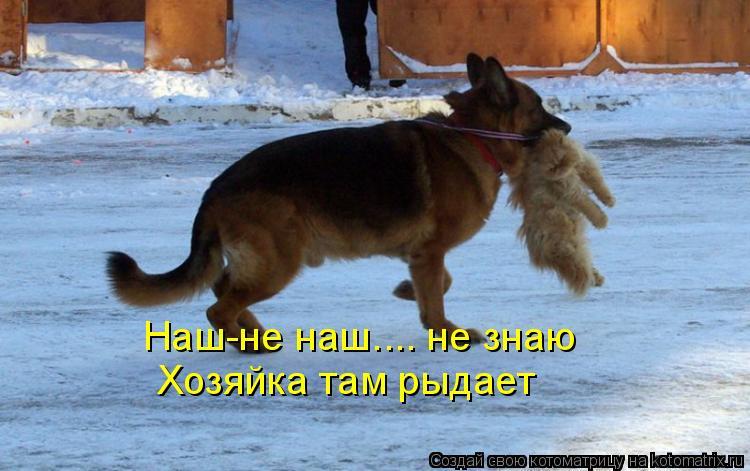 Котоматриця!)))) - Страница 9 1034444