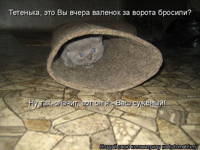 Котоматриця!)))) - Страница 9 1037036