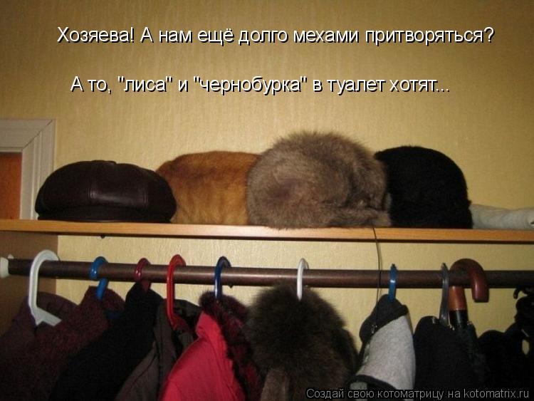 Котоматриця!)))) - Страница 9 1045207