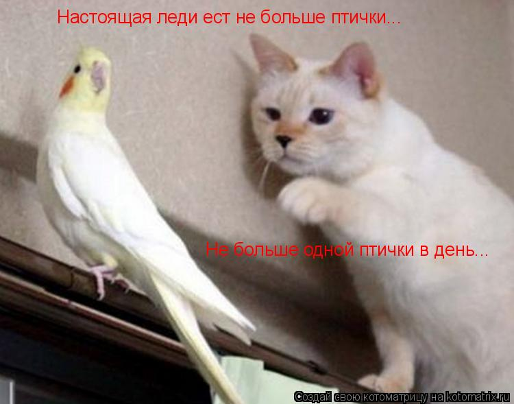Котоматриця!)))) - Страница 9 1051788