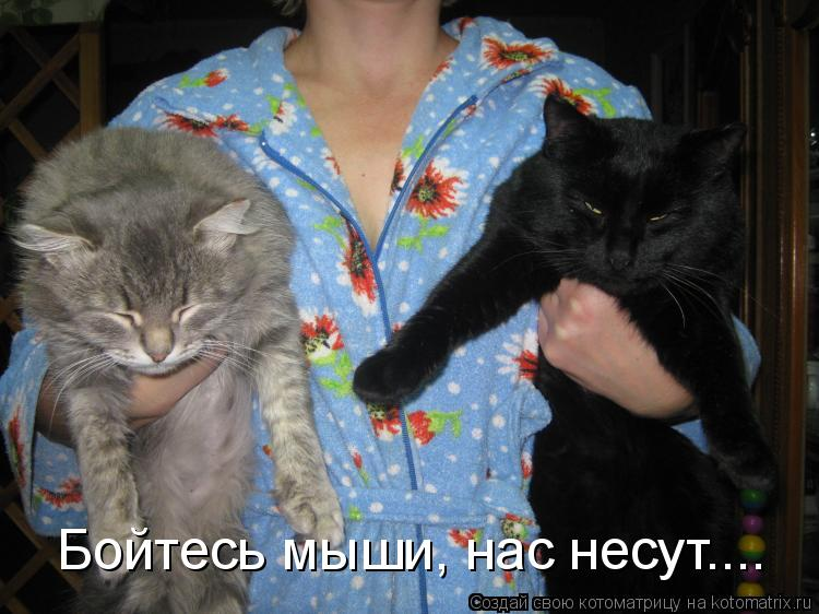 Котоматриця!)))) - Страница 9 1053759