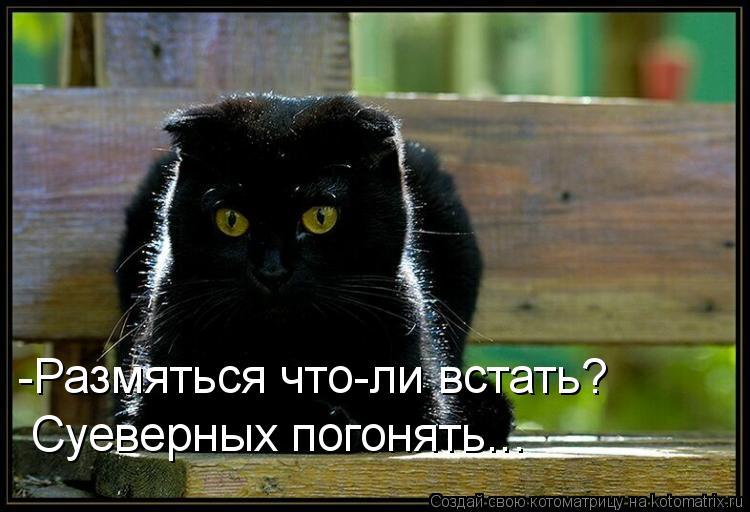Котоматриця!)))) - Страница 9 1055612