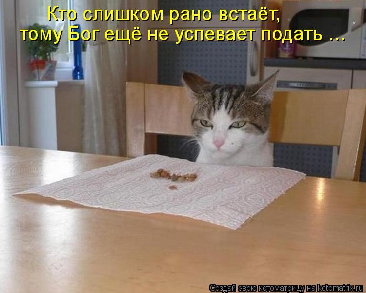 Котоматриця!)))) - Страница 9 1056187