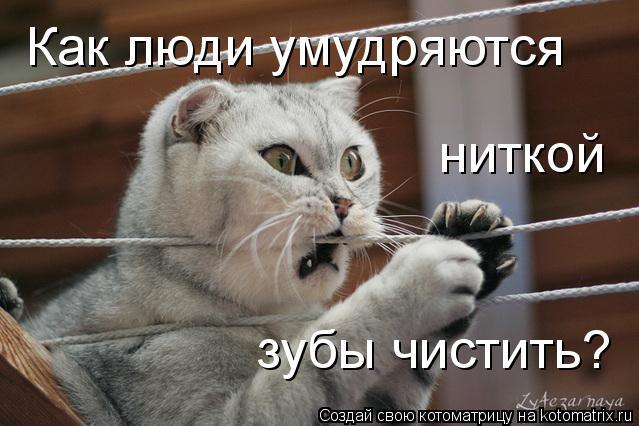 Котоматриця!)))) - Страница 9 1085356