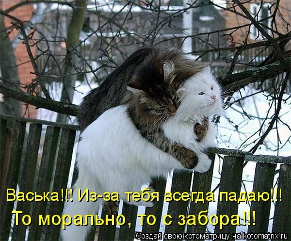 Котоматриця!)))) - Страница 9 1087374