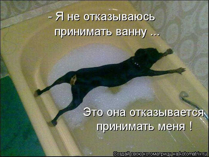 Котоматриця!)))) - Страница 10 1131434