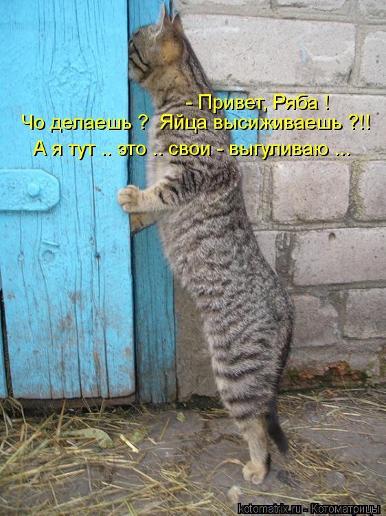 Котоматриця!)))) - Страница 10 1134051