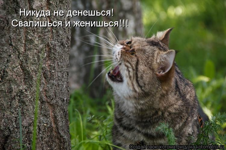 Котоматриця!)))) - Страница 10 1139737
