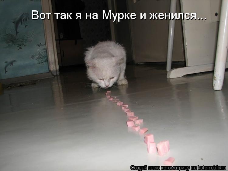 Котоматриця!)))) - Страница 10 F96802b847