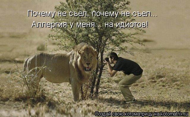 Котоматриця!)))) - Страница 10 95342bf849