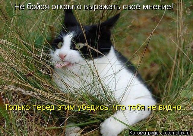 Котоматриця!)))) - Страница 10 E7b02fe1ad