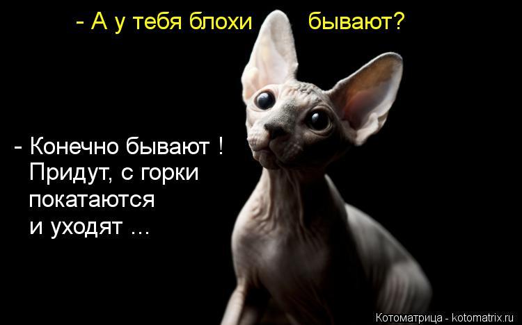 Котоматриця!)))) - Страница 10 Kotomatritsa_6S