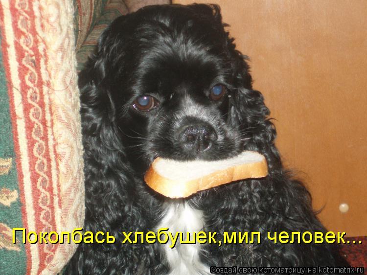 Котоматриця!)))) - Страница 10 Kotomatritsa_Zr