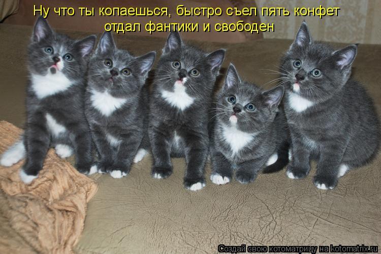 Забавные животные и птицы. - Страница 5 Kotomatritsa_n
