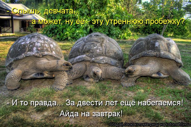 Настроение в картинках - Страница 2 Kotomatritsa_qO