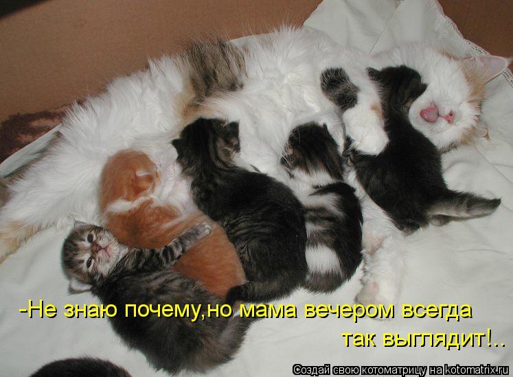 Котоматриця!)))) - Страница 10 Kotomatritsa_zp