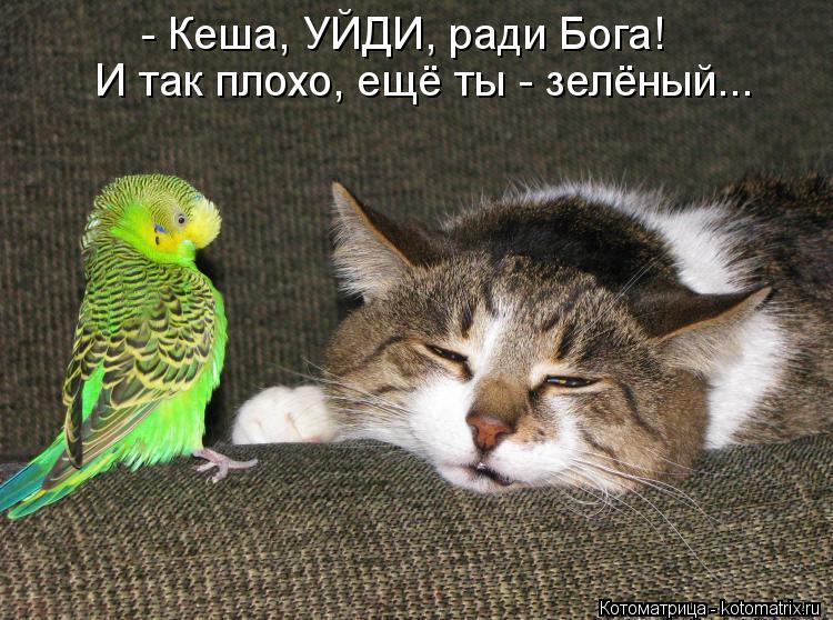 Котоматрица Kotomatritsa_-a