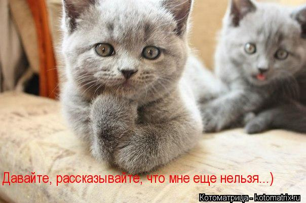 Котоматриця!)))) - Страница 10 Kotomatritsa_H
