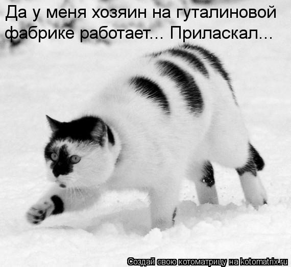 Котоматриця!)))) - Страница 10 Kotomatritsa_vQ