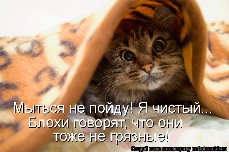 Котоматрица Kotomatritsa_S