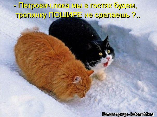 Котоматриця!)))) - Страница 10 Kotomatritsa_W