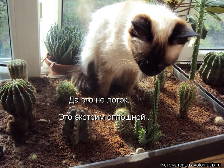 Котоматриця!)))) - Страница 10 Kotomatritsa_Lz