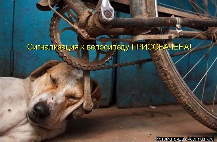 Котоматриця!)))) - Страница 10 Kotomatritsa_iI