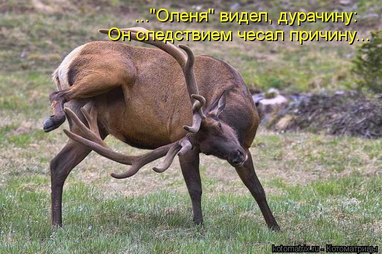 Котоматрица Kotomatritsa_6Q